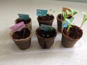 mini garden seedlings